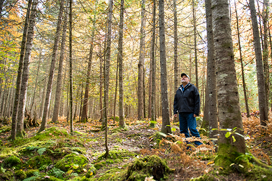 Dr. Robert Wagner standing among fir trees in the University of Maine forest.