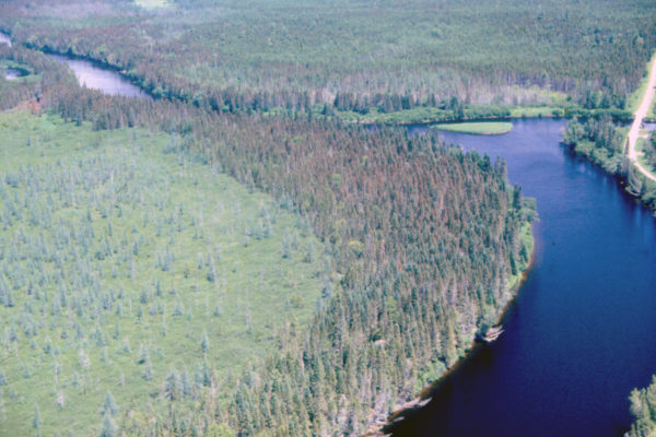 Aerial photo of dead trees along riverbank