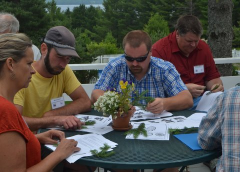 Photo of teachers investigating the differences between spruce & fir and looking for subtle characateristics of needle attachments.