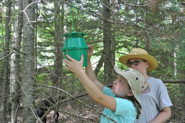 Photo of 2 children checking a spruce budworm trap.