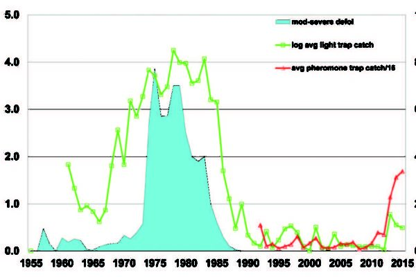 Graph depicting SBW moth catches from 1955-2015.
