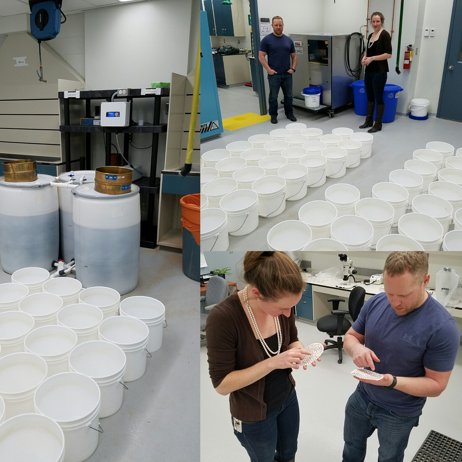 Photos of the spruce budworm L2 analysis process featuring Rob Johns and Emily Owens of the Canadian Forest Service.