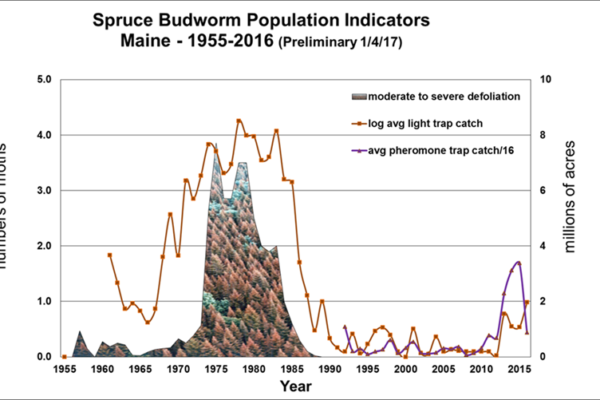 Graph of the spruce budworm population indicators from the Maine Forest Service
