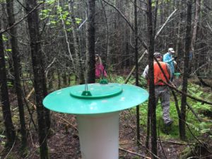 Photo of SBW trap hanging in woods