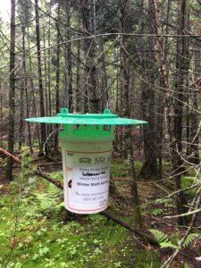 Photo of SBW trap winter moth survey