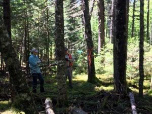 Photo of citizen scientists retrieving budworm traps