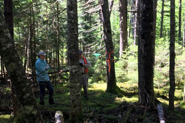 Photo of citizen scientists retrieving budworm traps
