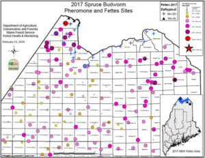 Map of 2017 pheromone and fettes sites