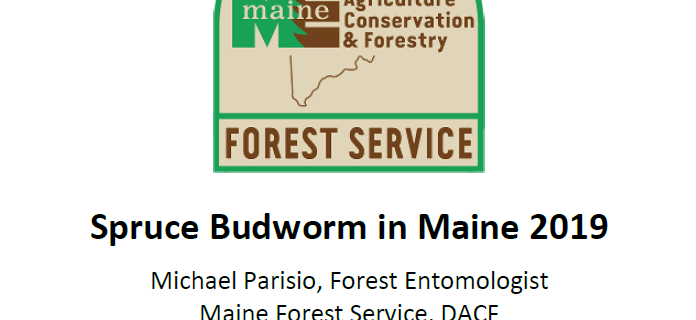 cover page Maine Forest Service 2019 spruce budworm report